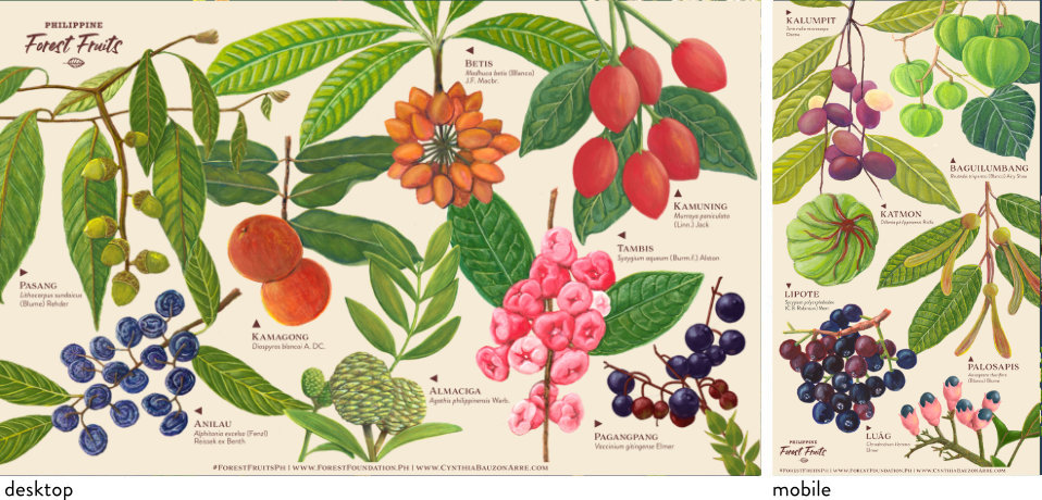 Philippine Forest Fruits wallpapers